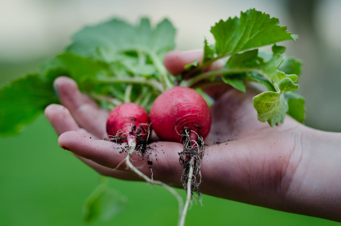 root crops on hand